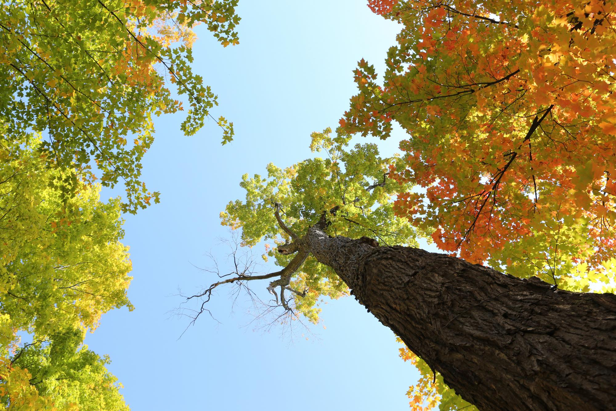 Life-of-Pix-free-stock-photos-trees-autumn-leaves-sky-leeroy